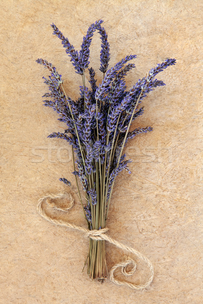Lavender Flowers Stock photo © marilyna