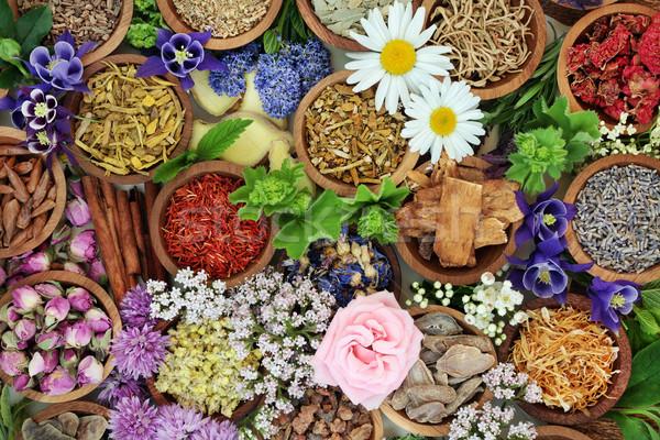 Naturale alternativa essiccati fresche erbe Foto d'archivio © marilyna