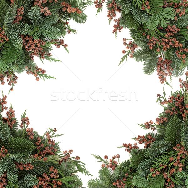Foto d'archivio: Inverno · flora · confine · blu · abete · rosso · cedro