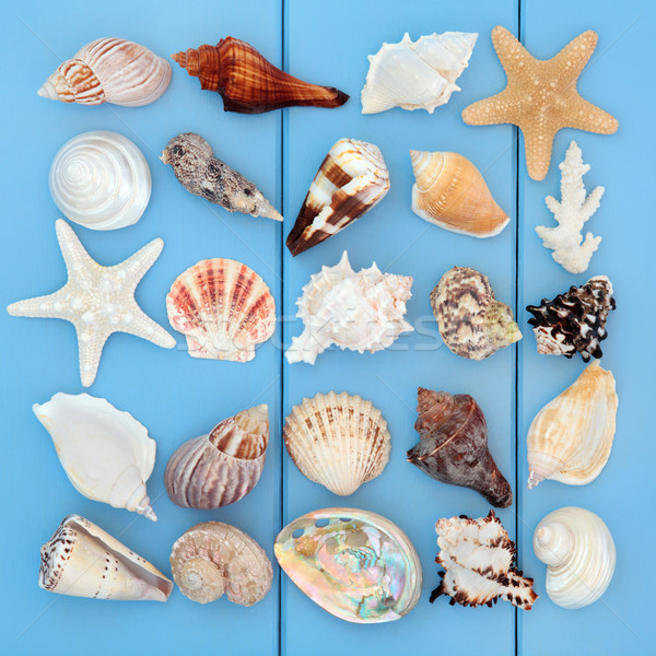 Seashell Collage Stock photo © marilyna