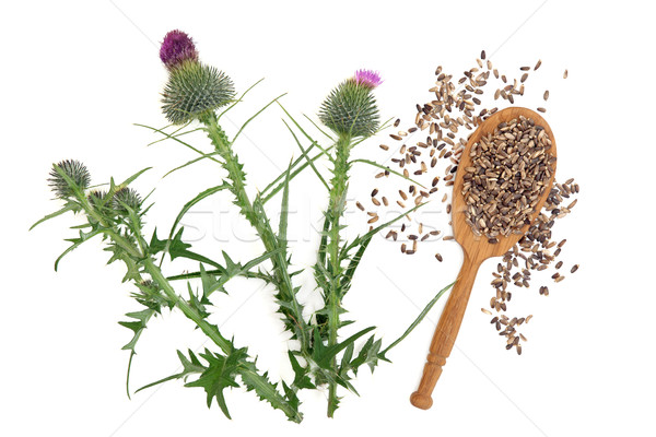 Stock photo: Milk Thistle Herb