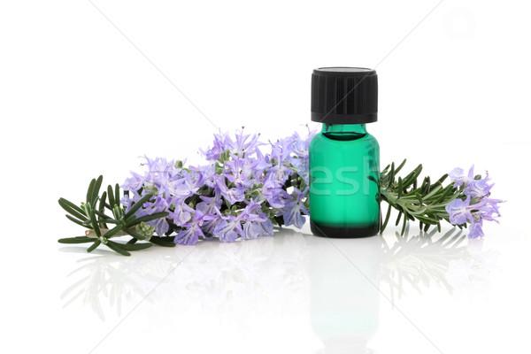 Rozmaryn herb esencja kwiat liści aromaterapia Zdjęcia stock © marilyna