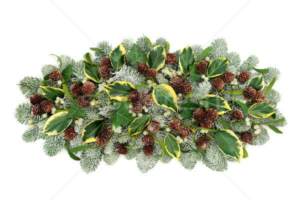 Natural Winter Flora Decoration Stock photo © marilyna