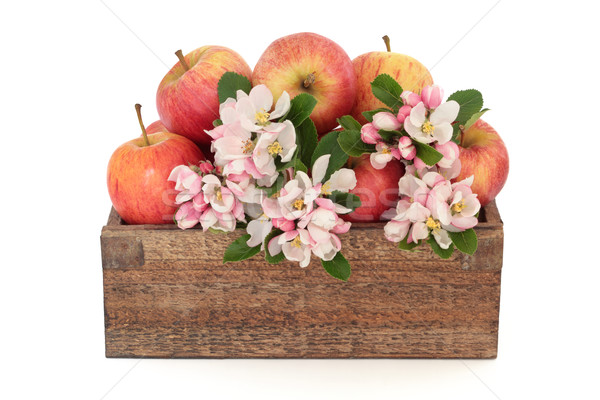 Apple Flower Blossom Beauty Stock photo © marilyna