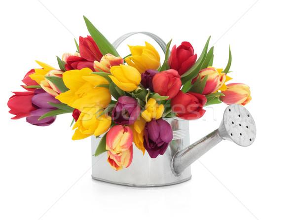 Primavera beleza tulipa flores arco-íris cores Foto stock © marilyna