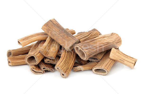 Reed Root Stock photo © marilyna