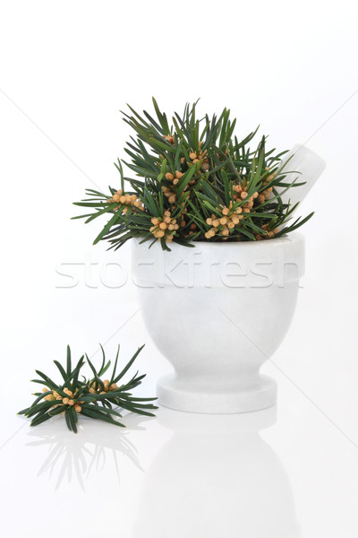 Yew Leaf Sprigs Stock photo © marilyna