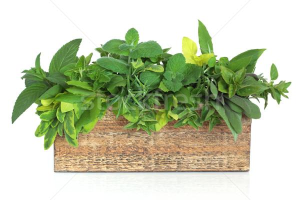 Kruid blad mengsel rustiek houten plant Stockfoto © marilyna