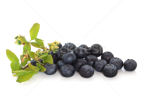 Blueberries and Flower Sprig Stock photo © marilyna