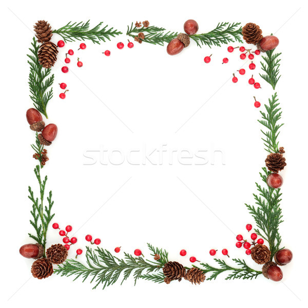 Winter Flora and Holly Berry Frame Stock photo © marilyna