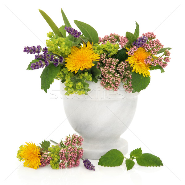 Healing Herbs and Flowers Stock photo © marilyna
