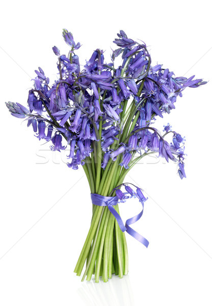 Bluebell Flower Posy Stock photo © marilyna