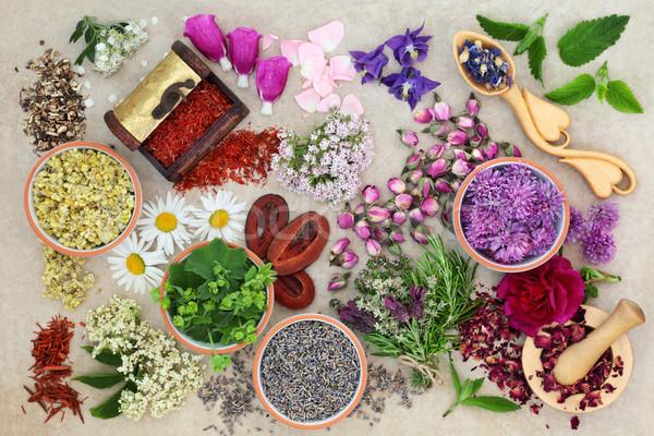 Herbs for Alternative Herbal Medicine Stock photo © marilyna