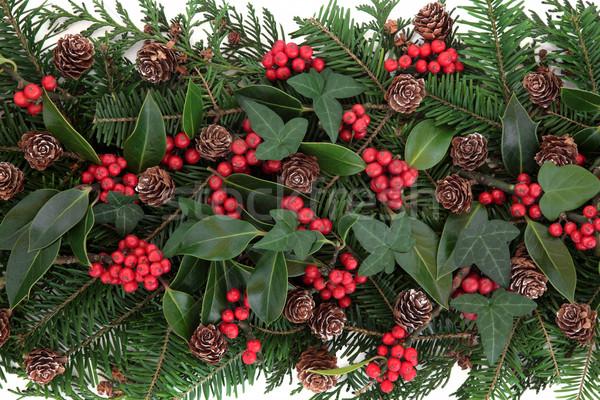 Tél növényvilág karácsony piros bogyó borostyán Stock fotó © marilyna