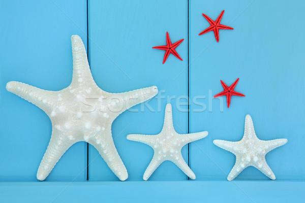 морем Существа Starfish ракушки синий Сток-фото © marilyna