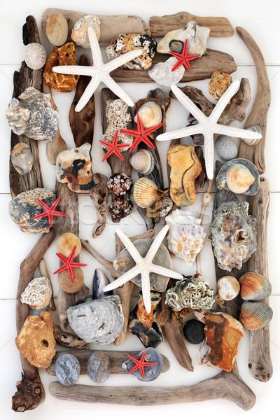 Troncos concha beleza naturalismo abstrato conchas Foto stock © marilyna
