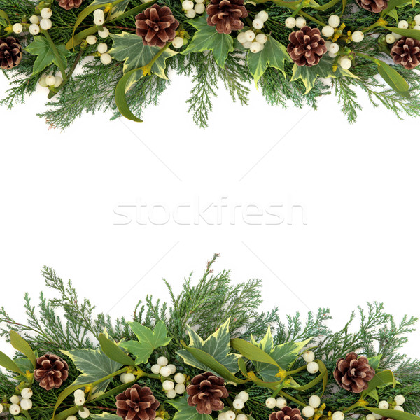 Christmas Greenery Border Stock photo © marilyna