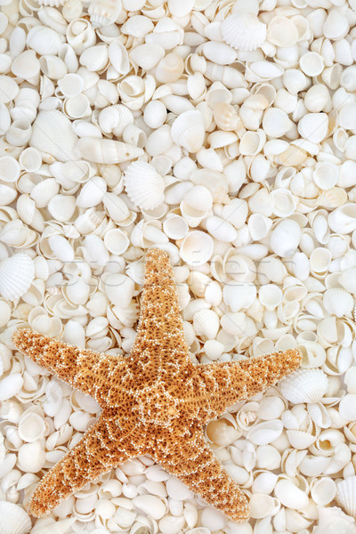 Starfish and Seashell Beauty Stock photo © marilyna