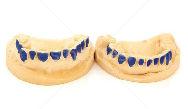 Dental Teeth Mould  Stock photo © marilyna