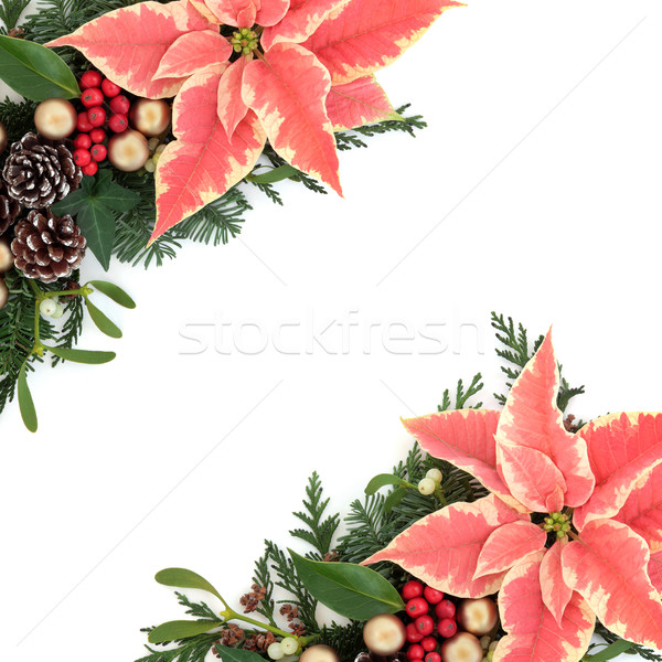 Poinsettia Floral Border Stock photo © marilyna
