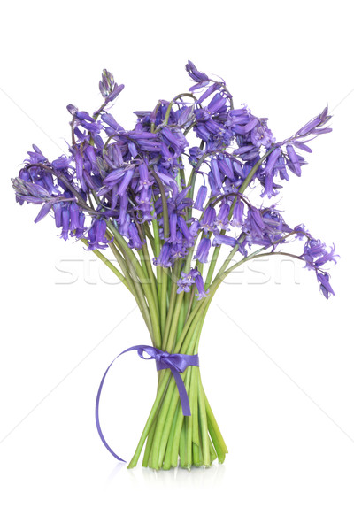 Bluebell Flowers Stock photo © marilyna