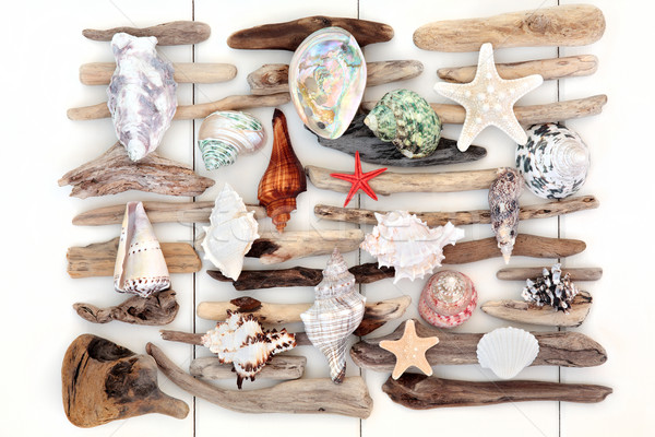 Shell and Driftwood Beauty Stock photo © marilyna
