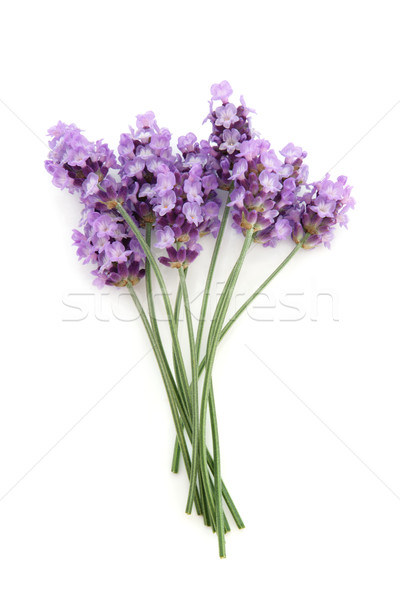 Lavender Herb Flower Posy Stock photo © marilyna