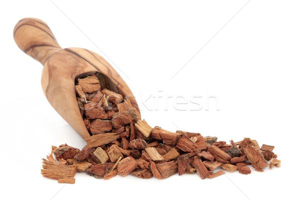 Zdjęcia stock: Dąb · kory · herb · oliwy · drewna · szufelka