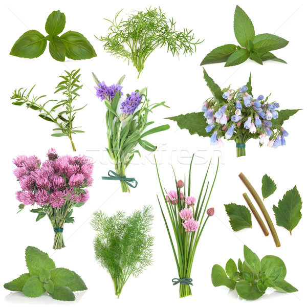 Friss gyógynövények nagy gyógynövény levél virág Stock fotó © marilyna