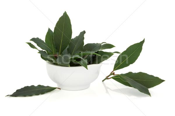 Babérlevél gyógynövény levél porcelán étel gyógyszer Stock fotó © marilyna