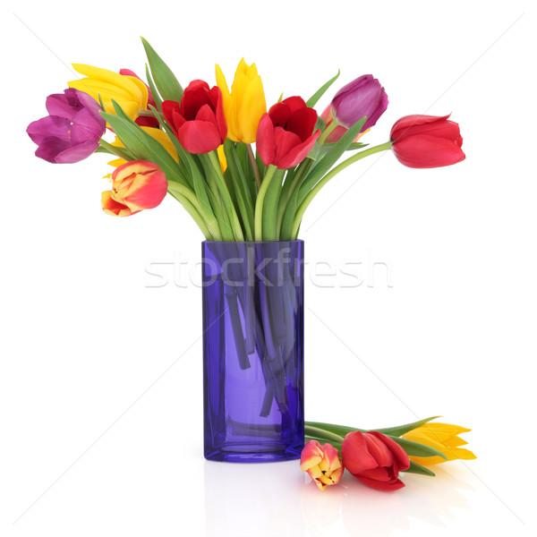 Tulipano fiore bellezza fiori Rainbow colori Foto d'archivio © marilyna