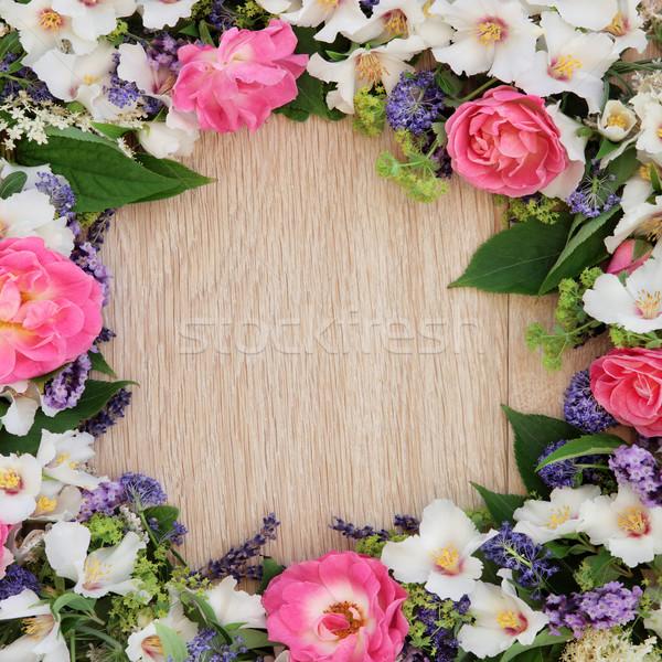 Summer Fower Beauty Stock photo © marilyna