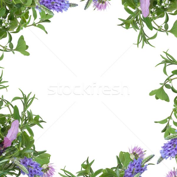 Erva flor fronteira lavanda flores alecrim Foto stock © marilyna