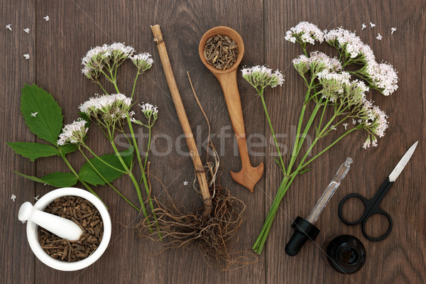 Valerian Herb Root and Flowers Stock photo © marilyna