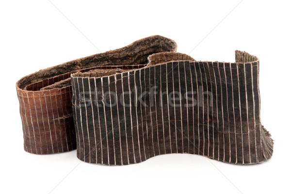 Hardy Rubber Tree Bark Stock photo © marilyna