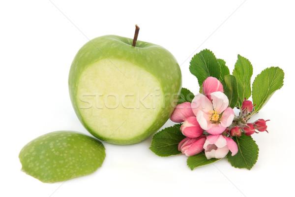 Nagyi alma zöld virág virág fehér Stock fotó © marilyna