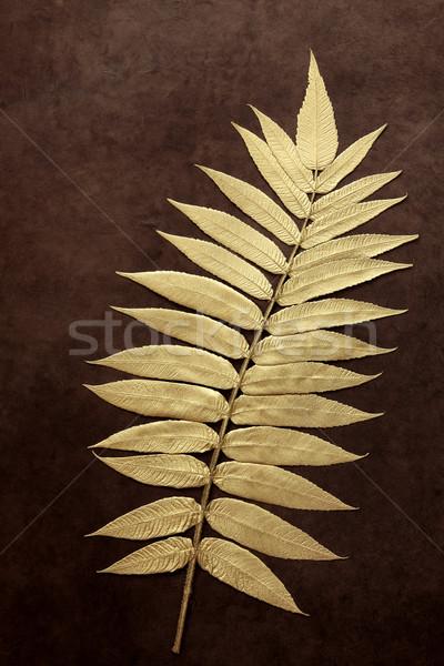 Gold Leaf Beauty Stock photo © marilyna