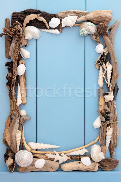 Conchas troncos mar concha abstrato fronteira Foto stock © marilyna