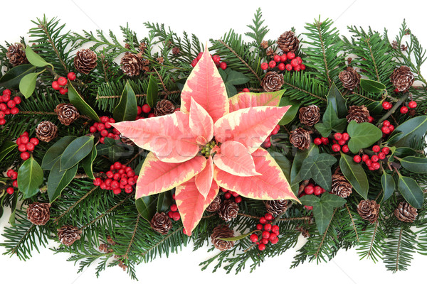 Winter Floral Decoration Stock photo © marilyna