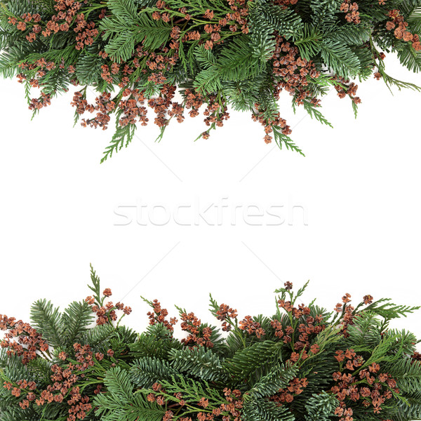 Spruce and Cedar Cypress Border Stock photo © marilyna