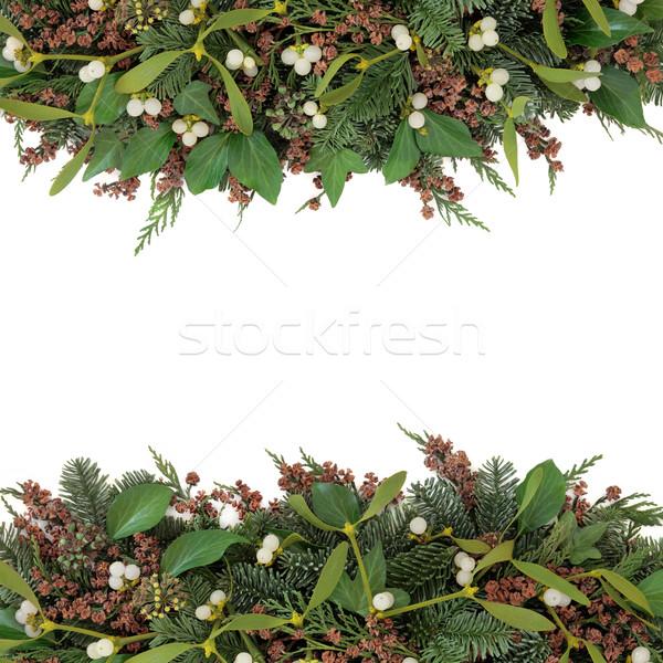 Fagyöngy tél növényvilág keret borostyán kék Stock fotó © marilyna