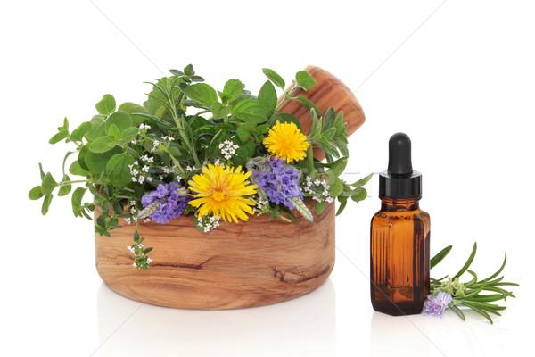 Gyógynövény terápia levél virág rozmaring levendula Stock fotó © marilyna