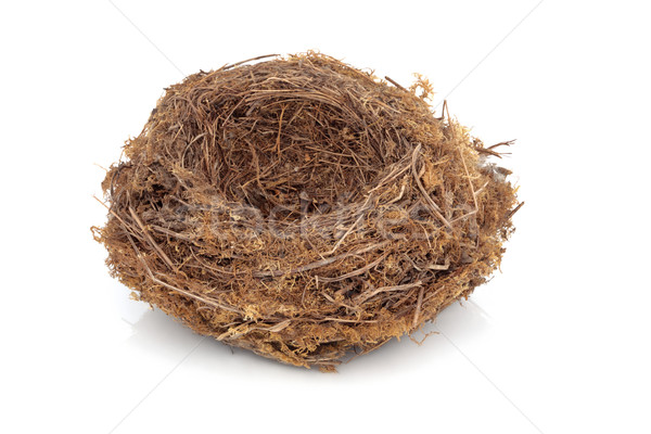 Bird Nest Stock photo © marilyna