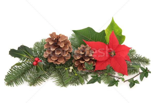 Karácsony növényvilág állatvilág dekoráció fagyöngy bogyók Stock fotó © marilyna