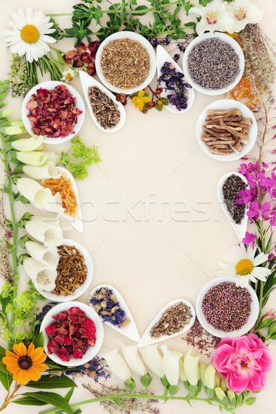 Phytothérapie ingrédients guérison herbe fleur utilisé Photo stock © marilyna