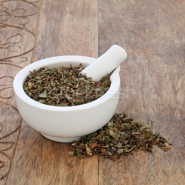 Figwort Leaf Herb Stock photo © marilyna