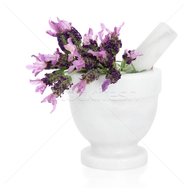Lavender Herb Flowers  Stock photo © marilyna