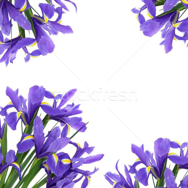 Iris Flower Beauty Stock photo © marilyna