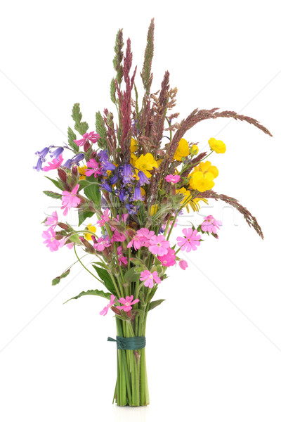 Dziki kwiat kwiaty trawy odizolowany biały Zdjęcia stock © marilyna
