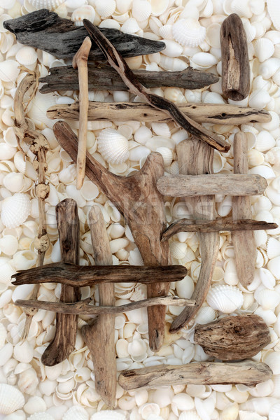 Driftwood and Seashell Abstract  Stock photo © marilyna
